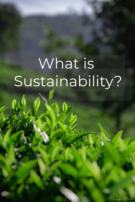 What is sustainability??