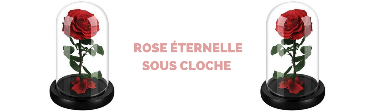rose eternelle sous cloche