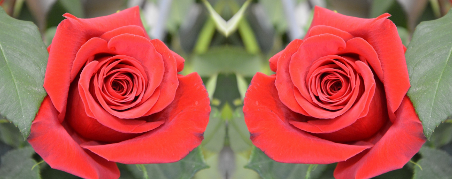 rose rouge signification