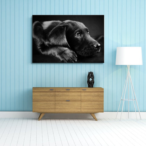 Modern Pet Black Wall Art.