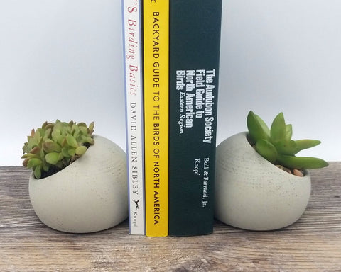 Flower Plus on Bayview - toronto - leaside - succulent bookend
