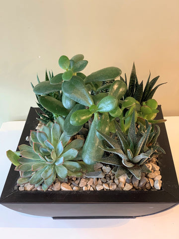 Flower Plus - fresh flower arrangements - baibiew - leaside - succulent arrangement