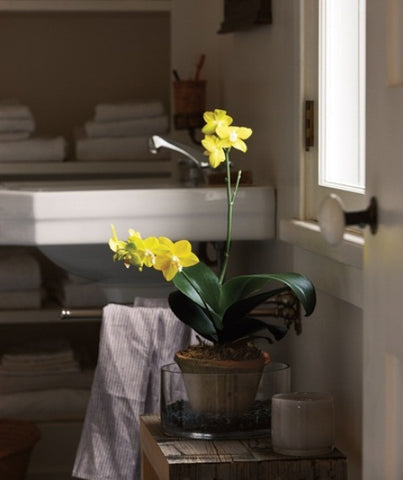 MODERN BATHROOM WITH ORCHID