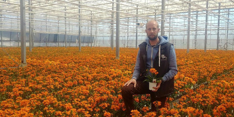 flower farmer in a greenhouse