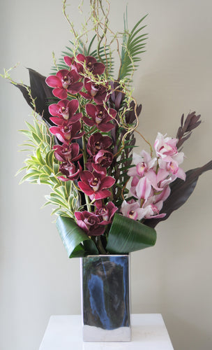 C2- Cymbidium Orchids - Flowerplustoronto