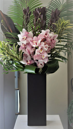 C3- Cymbidium Orchids - Flowerplustoronto