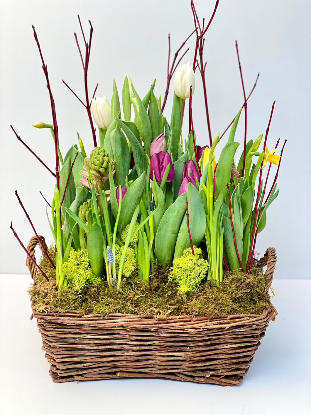 SP9 - Spring Bulbs (Colours based on Availability) - Flowerplustoronto