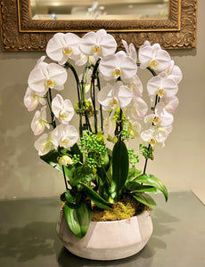 P54- Modern Orchid Arrangement in concrete planter - Flowerplustoronto