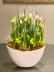 SP21 - Modern Spring Bulbs (Colours based on Availability) - Flowerplustoronto