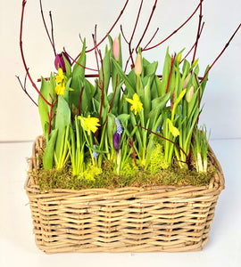 SP29 - Spring Bulbs (Colours based on Availability) - Flowerplustoronto