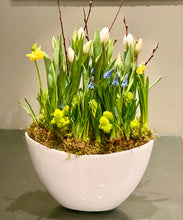 Load image into Gallery viewer, SP21 - Modern Spring Bulbs (Colours based on Availability) - Flowerplustoronto