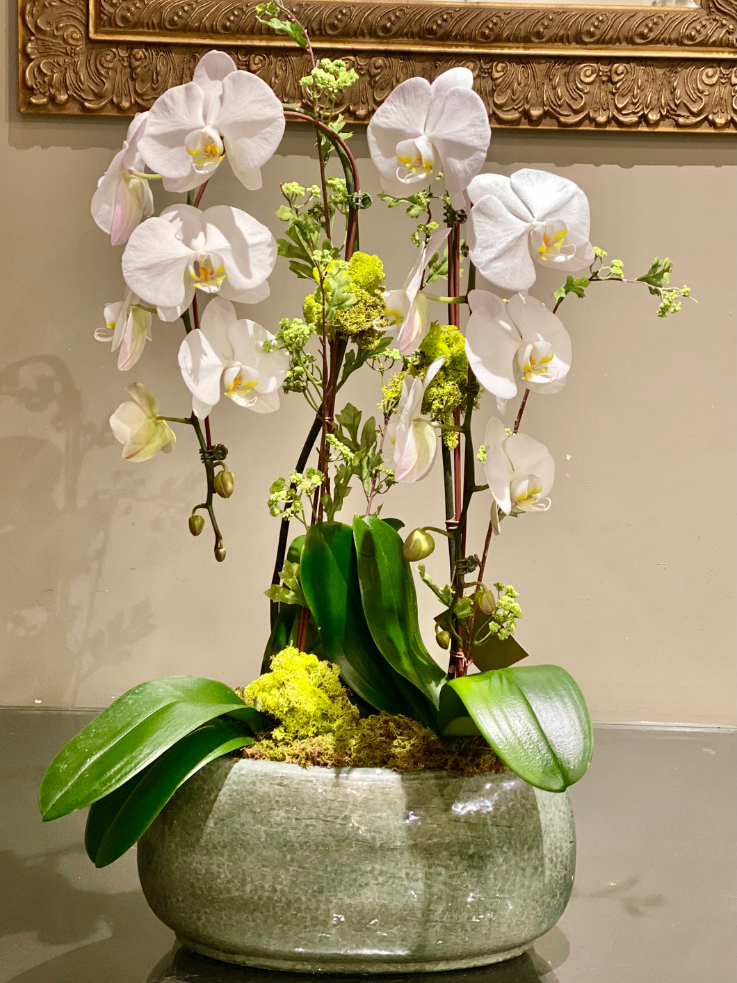 P55 - Classic Double Orchid Plant - Gray planter sold out - Flowerplustoronto