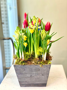 SP16 - Spring Bulbs (Colours based on Availability) - Flowerplustoronto
