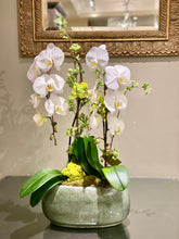 Load image into Gallery viewer, P55 - Classic Double Orchid Plant - Gray planter sold out - Flowerplustoronto