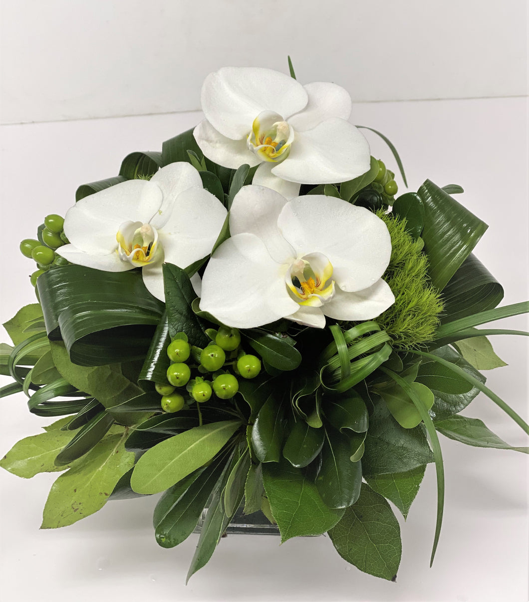 F41 -  White Orchid Arrangement - Flowerplustoronto