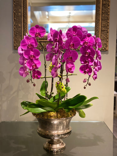 P43 - Luxurious Orchid Arrangement - Flowerplustoronto