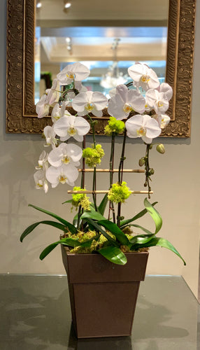 P17 - Elegant White Orchid Arrangement - Flowerplustoronto