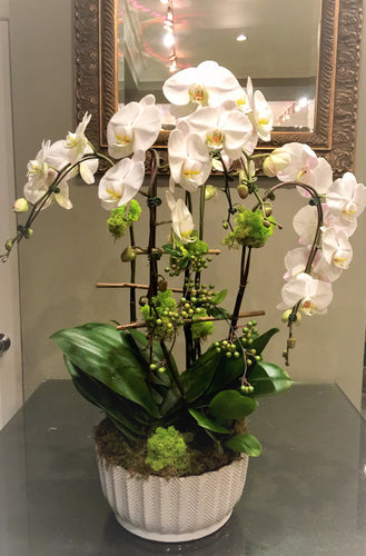 P29 - Luxurious Orchid Arrangement - Flowerplustoronto