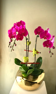 P16 - Contemporary Purple Orchid Arrangement - Flowerplustoronto