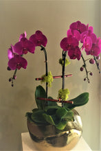 Load image into Gallery viewer, P16 - Contemporary Purple Orchid Arrangement - Flowerplustoronto