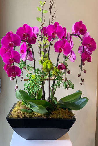 P13 - Luxurious Purple Orchid Arrangement - Flowerplustoronto