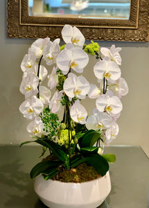 P7- Modern Orchid Arrangement in white planter - Flowerplustoronto