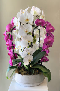 P20- Modern Orchid Arrangement - Flowerplustoronto