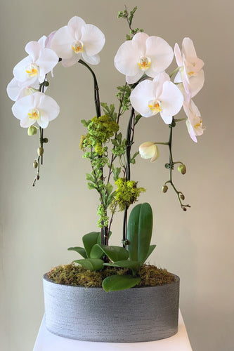 P42 - Elegant White Orchid Arrangement - Flowerplustoronto