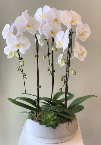 P40 - Modern Orchid Arrangement - Flowerplustoronto