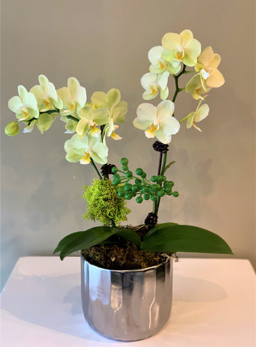 P28 - Mini Chartruese Orchid Arrangement - Flowerplustoronto