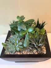 Load image into Gallery viewer, P46 - Succulents set in a Tapered Metal Square Planter - Flowerplustoronto