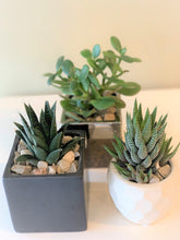 Load image into Gallery viewer, P48 - A Collection of Three Different Succulents set in Assorted Planters - Flowerplustoronto