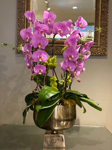 P5 - Elegant Orchid Arrangement - Flowerplustoronto