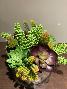 S38 - Succulent Arrangement - Flowerplustoronto