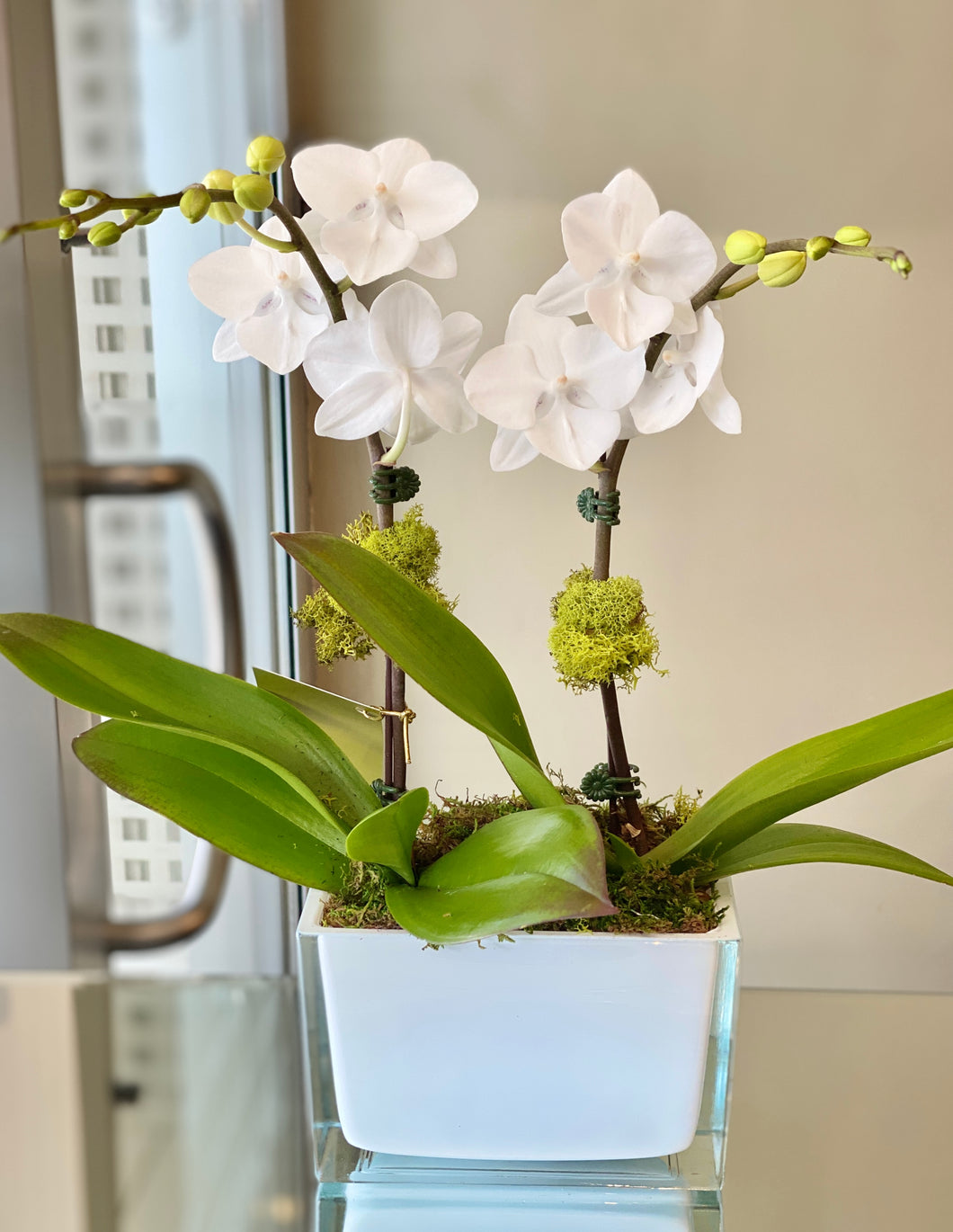 P100 - Mini White Orchid Arrangement - Flowerplustoronto