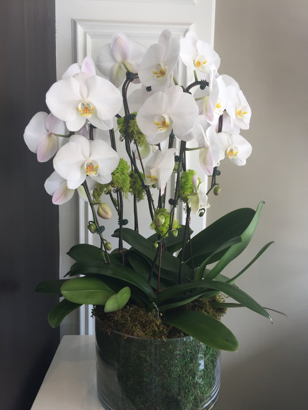 P26 - Elegant White Orchid Arrangement - Flowerplustoronto