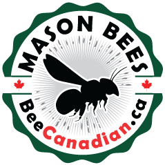 Bee Canadian