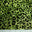 Flocked Cheetah Print Sequin Spandex Moss Green - NY Fashion Center Fabrics