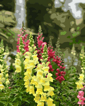 Load image into Gallery viewer, Oh Snap! Snapdragons- Paint by Number Kit