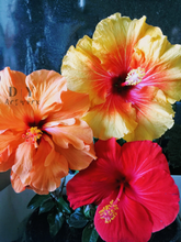 Load image into Gallery viewer, Aloha Hibiscus- Paint by Number Kit