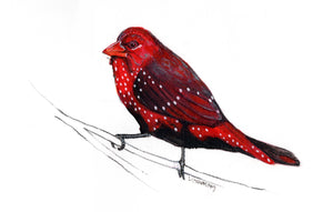"""Strawberry Finch"" Postcard - May"