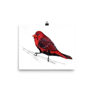 """STRAWBERRY FINCH"" Poster - (Giclee) 8x10"