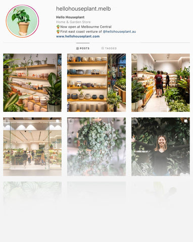Hello Houseplant Melbourne Instagram - Indoor Plants Melbourne