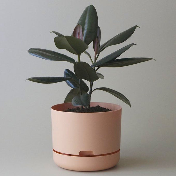 Self Watering Plant Pot - 250mm Pale Apricot