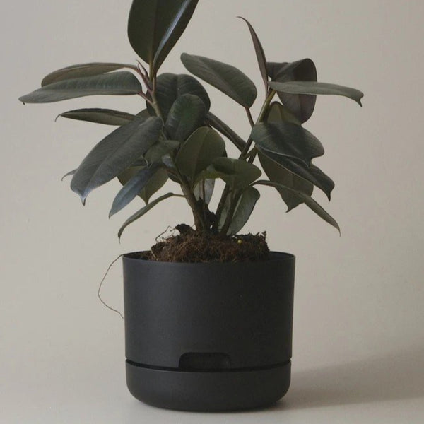 Self Watering Plant Pot - 170mm Recycled Black