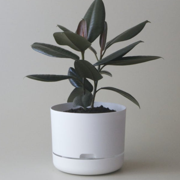 Self Watering Plant Pot - 250mm White Linen