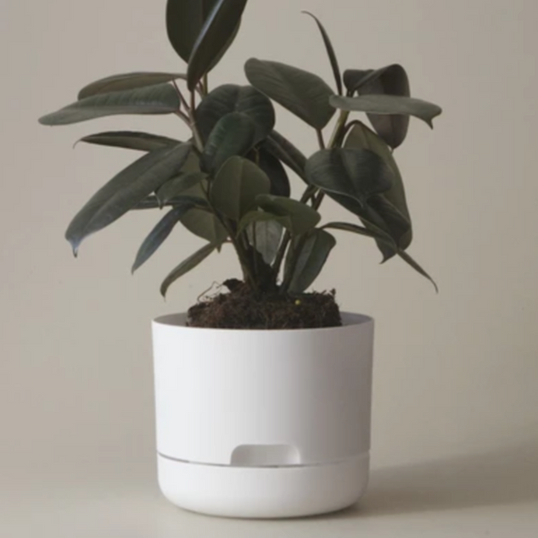 Self Watering Plant Pot - 300mm White