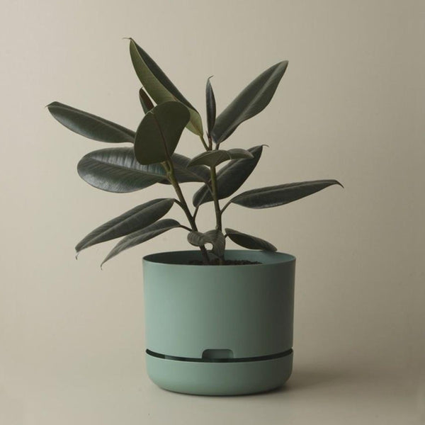 Self Watering Plant Pot - 170mm Cabinet Green