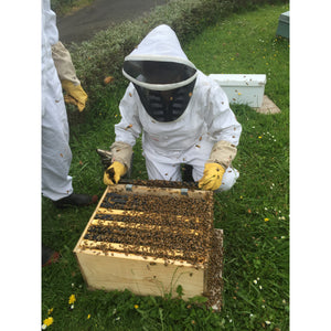 Apiculture Course for all ages and knowledge levels Saturday 8th and Sunday 9th September 2018