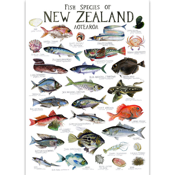 Fish Species of NZ Chart